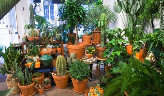 Welke planten in je nieuwe huis?